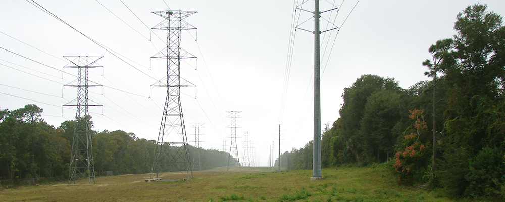 Power lines near trees