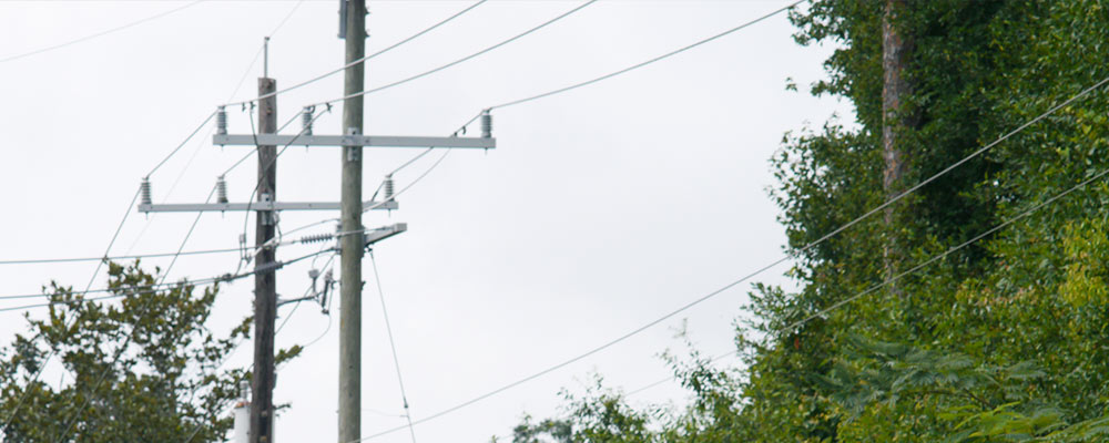 Image of Power lines running near trees